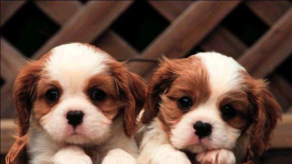 Un incontro per sfatare le leggende metropolitane sui cani
