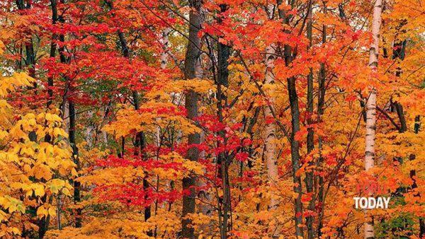 Un'escursione nei colori dell'autunno
