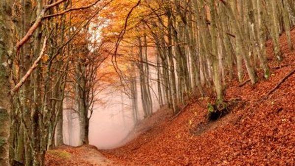In Campigna la 24esima edizione di Poesia e Natura nel Parco