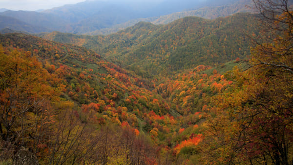 Le mille sfumature del Parco: un weekend tra foliage, trekking estremo e castagne