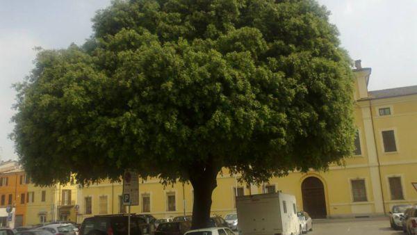 Camminata alla scoperta degli scorci di verde nel centro storico