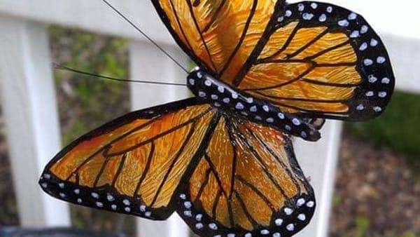 Farfalle, nottuidi e cambiamento climatico, un laboratorio sull'economia circolare