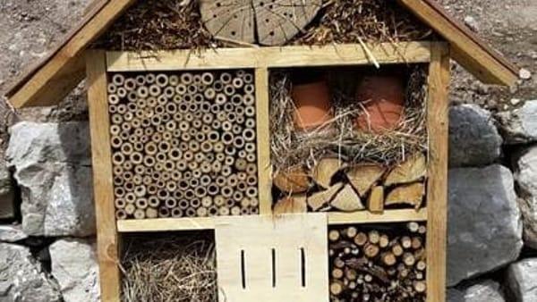 Si costruiscono casette per gli insetti al giardino botanico