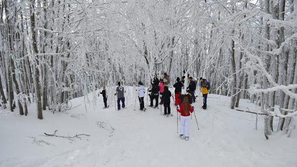Tanta neve fresca in Campigna: impianti aperti e ciaspolata nel Parco