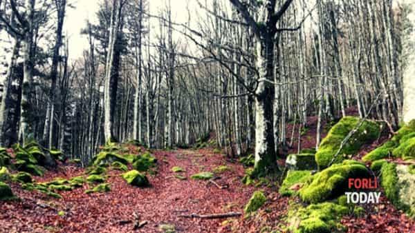 Un'escursione nel cuore pulsante delle Foreste Casentinesi