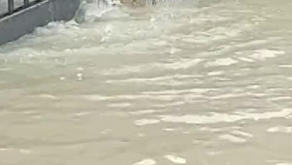 Alluvione a Villafranca, via Lughese era un fiume in piena e spunta anche una carpa