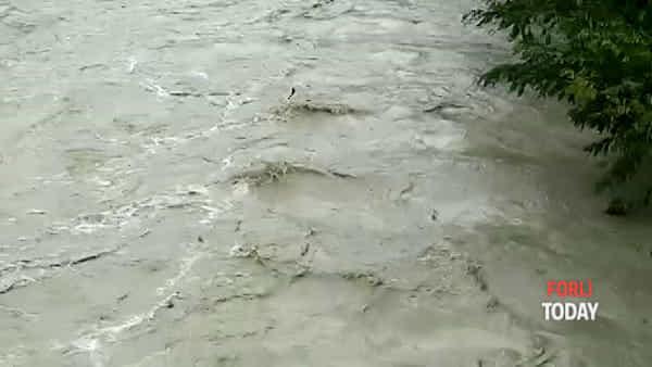 Piogge intense: la piena del fiume Montone a Castrocaro