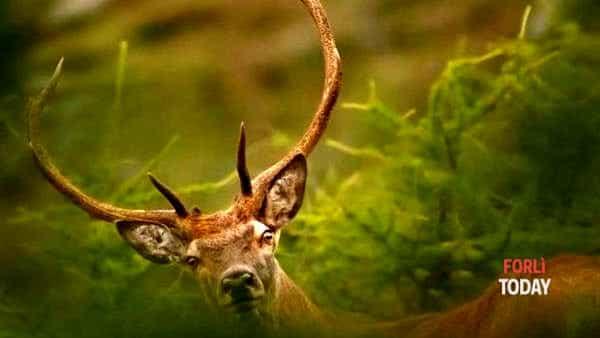 Trekking tra boschi e altipiani alla scoperta dei cervi