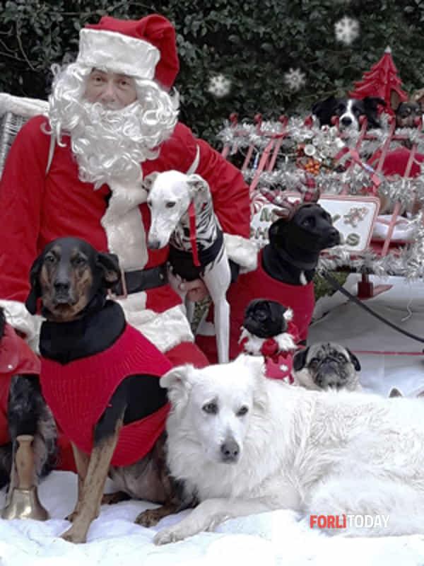 Immagini Natalizie Con Cani.A Castrocaro La Festa Di Natale Con Le Piu Belle Foto Dei Cani