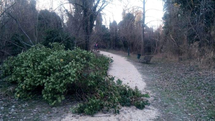 albero crollato parco fluviale castrocaro