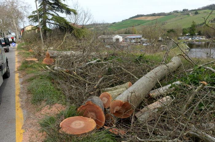 Taglio degli alberi a San Lorenzo in Noceto